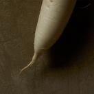 Vegetable02