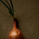 Vegetable05